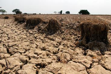 Las sequías que producirá el Fenómeno del Niño también afectarán a la ganadería y la agricultura. Elpaís.com.co | Colprensa